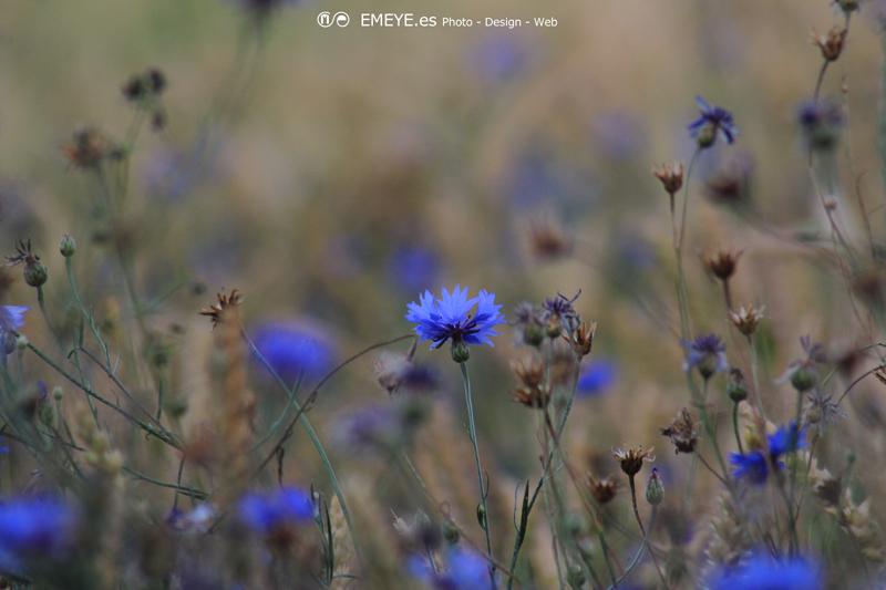 Fotografías de Europa por Emeyé Flores Azules