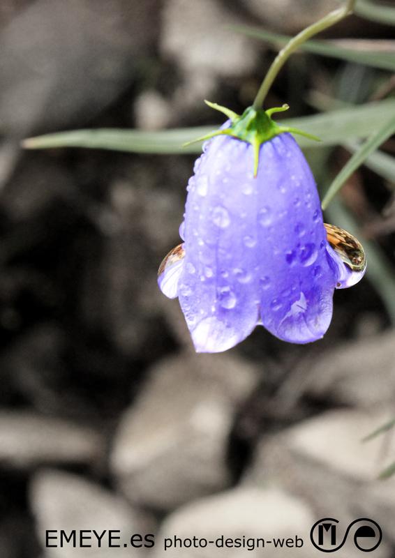 Fotografías de Europa por Emeyé Rocío en la flor