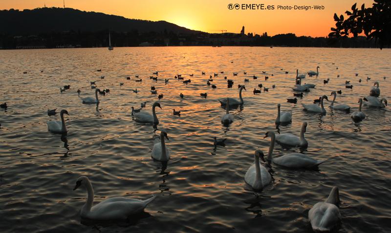 Fotografías de Europa por Emeyé cisnes
