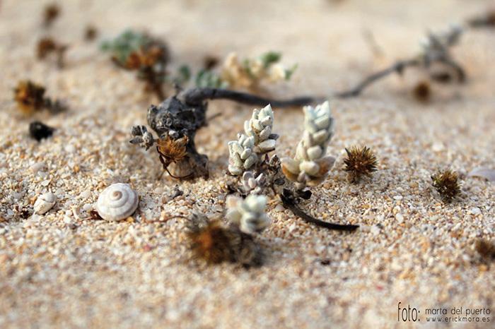 Fotografías de Paisajes en Fuerteventura por Emeyé Las dunas